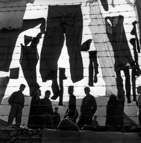 "Werner Bischof""Güney Kore, Koje Island of Koje Do, 1952""A camp for North Korean prisoners of war. Laundry hanging on the barbed wire."